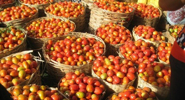 Tomatoes in baskets
